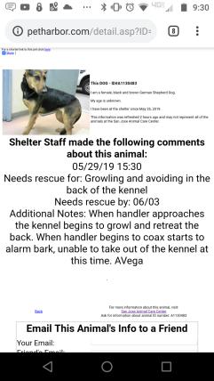 Dog-GermanShepherdDog-2019-05-31-FoundInSilverCreekArea-ShelterUPDATE